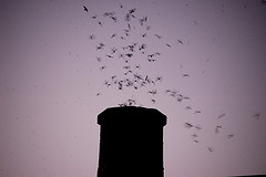 Chimney Swift Roost. Photo by: Veronica Rose