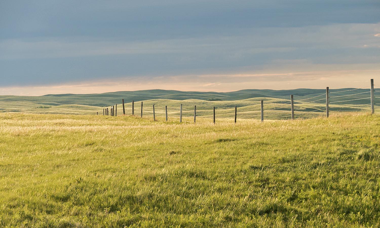 Un nouveau programme qui profitera aux éleveurs de bétail et aux oiseaux des prairies