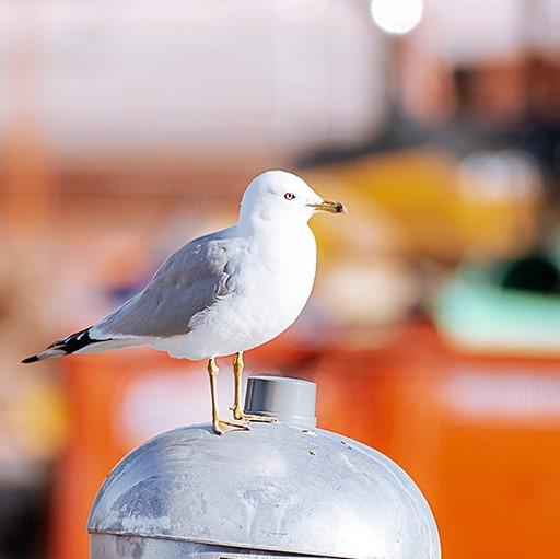 Pour rester unis, la version « pour emporter » de la Fête des oiseaux de Toronto!