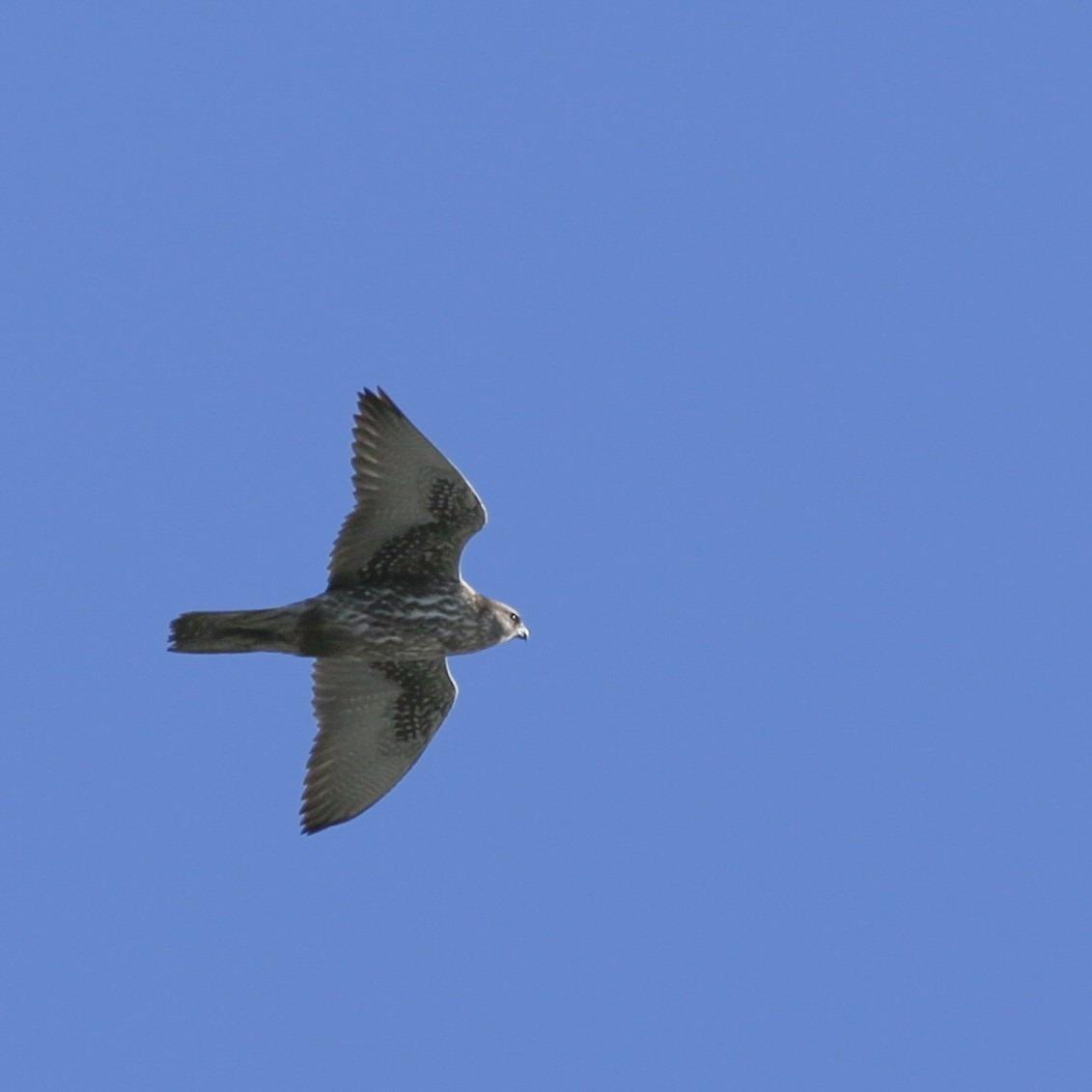 Observer les oiseaux de chez soi, une perspective nouvelle