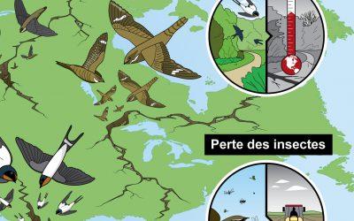 Une feuille de route pour la préservation des insectivores aériens
