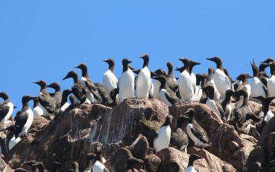Mises à jour importantes pour les membres d'Oiseaux Canada