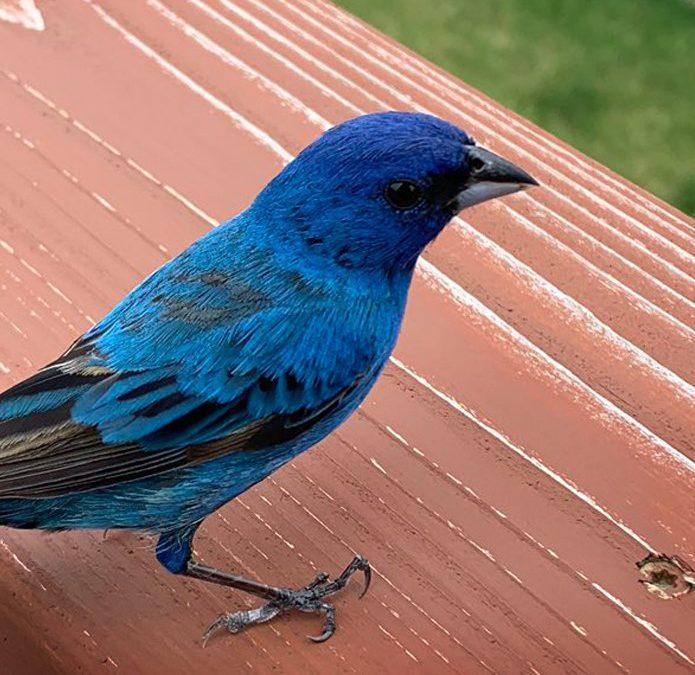 Sauvez des oiseaux. Prévenez des collisions cet automne.