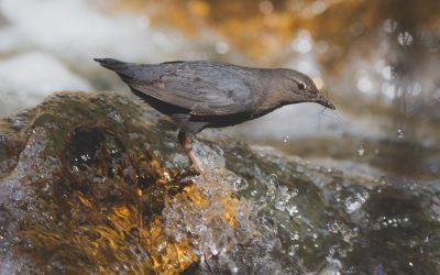 Concours de photos d'oiseaux d'hiver d'Oiseaux Canada