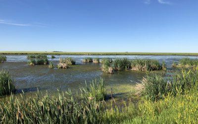 Huit façons d'apprécier et de préserver les milieux humides