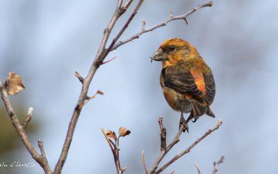 Les gagnants du concours de photos d'oiseaux d'hiver